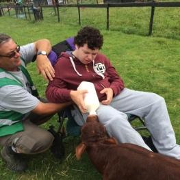 2016-feeding-calf
