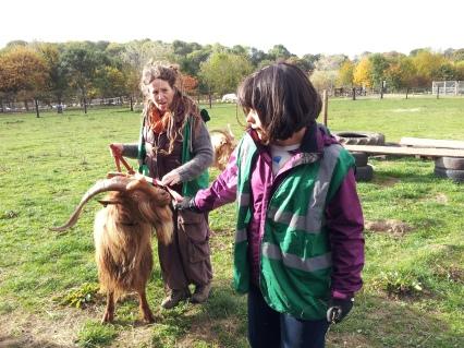 2016-oct-goat