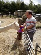 2018 - Aug feeding alpacas