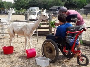 2018 - July feeding alpacas
