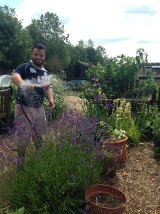 2018 - June watering lavender